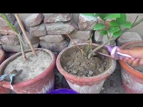 766# Soil Drying in Summer Season???