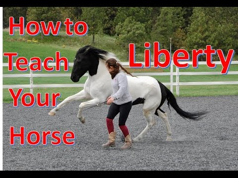 How to Teach Your Horse to do LIBERTY [The first steps of liberty training]