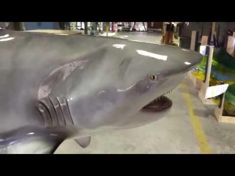Bull Shark mount - Gray Taxidermy Fishmounts, Fish replicas