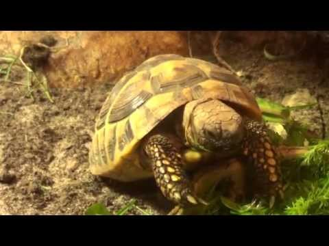 Tortoises- What's Normal? Eating