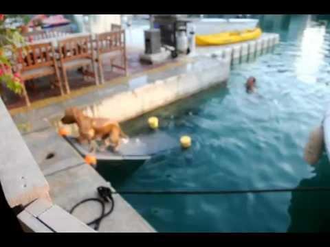 Dog ramp floating