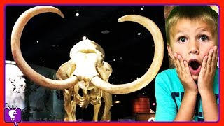 Mammoth at Museum! Plus Universal Studios Theme Park Tour on Vacation by HobbyKidsTV