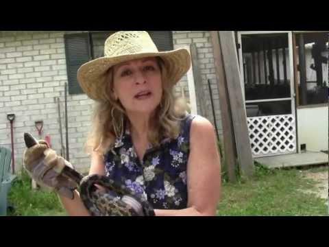 Chicken Coop Snake Wrangler