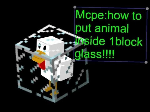 mcpe:How to put animals in a 1 block glass!!!!
