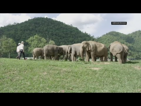 Actress treks to Thailand to free an Asian elephant in new doc