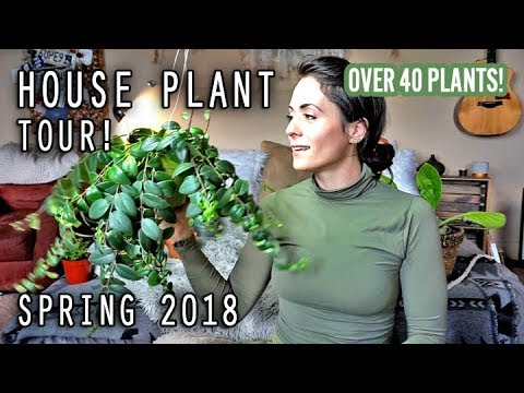 House Plant Tour Spring 2018 | Over 40 plants!