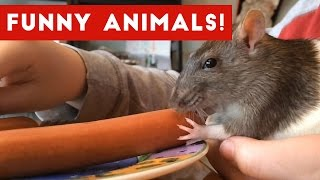 The Best Funny Pet & Animal Videos of 2017 Weekly Compilation | Funny Pet Videos
