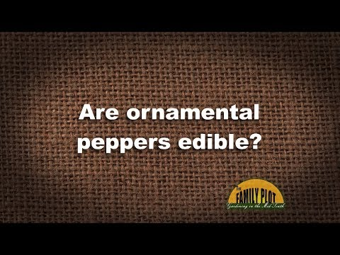 Q&A – Are ornamental peppers edible?