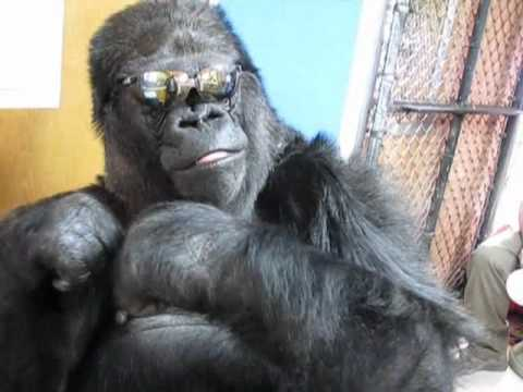 Koko's Alien Glasses