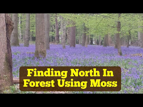 How To Use Moss To Find Direction of North?