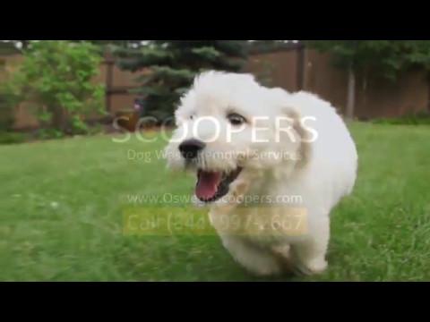 Keep Your Yard Dog POOP FREE