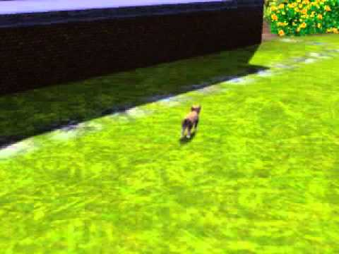Sims 3 Pets Stray Cat