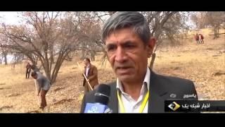 Iran Planting Oak trees, Yasouj city كاشت درختان بلوط شهر ياسوج ايران