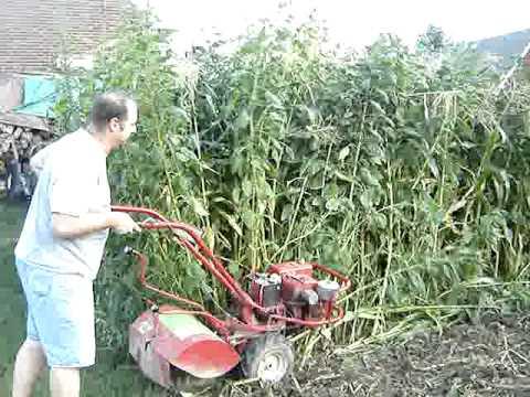 Tilling in corn stalks with a Troy Bilt Horse roto-tiller