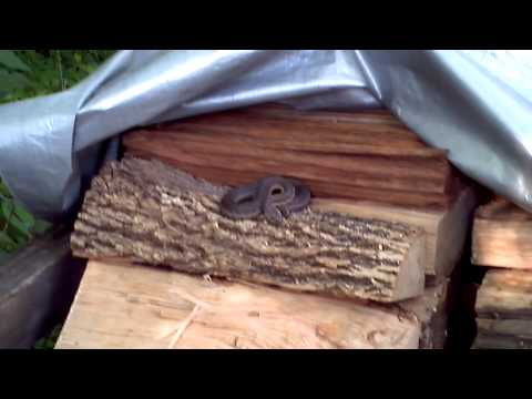 Snake in woodpile 1