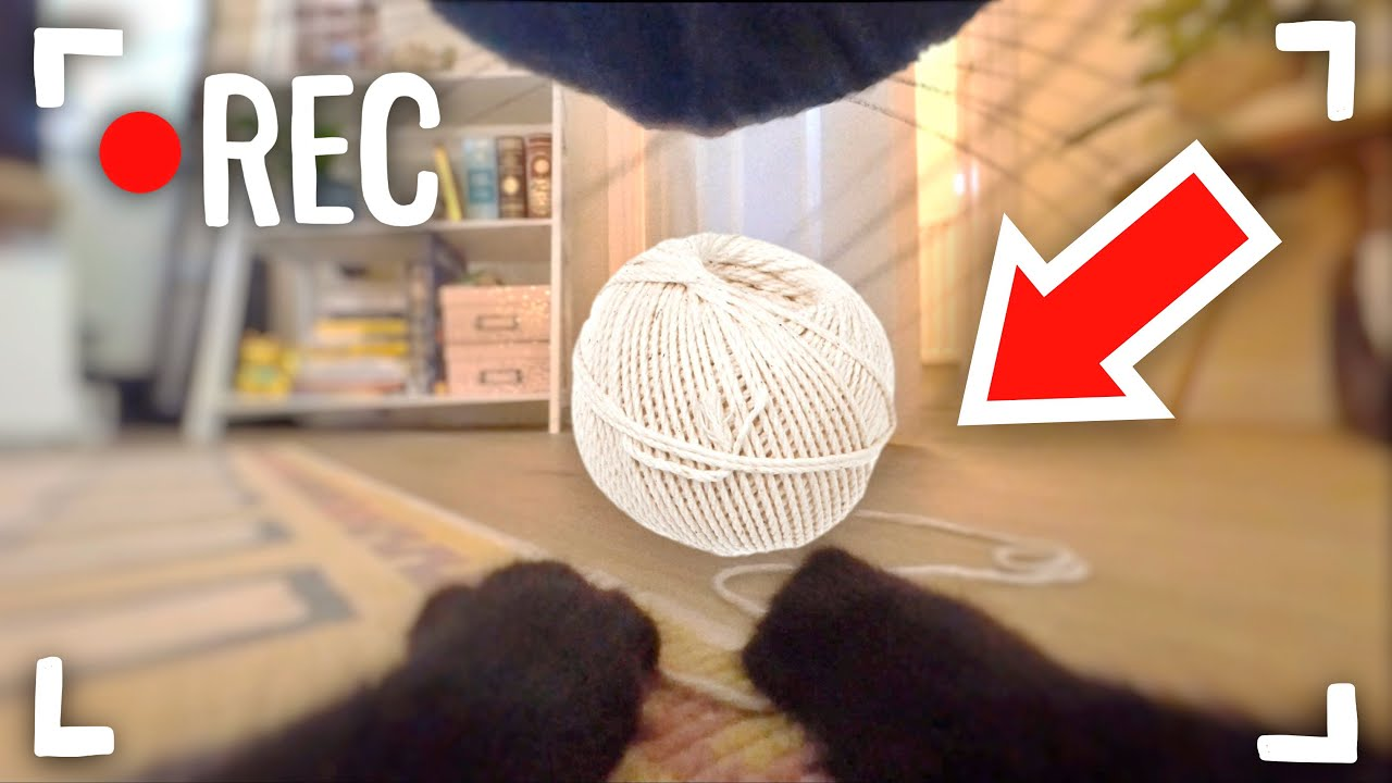 I Put a Tiny Camera on My Cat for 24 Hours