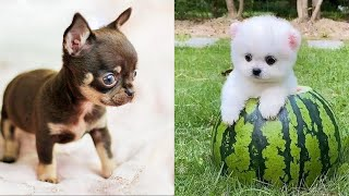 Baby Dogs - Cute and Funny Dog Videos Compilation #31   Aww Animals