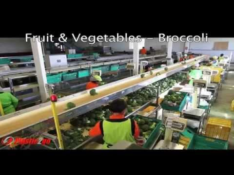 Plastic Bulk Containers for Food Processing