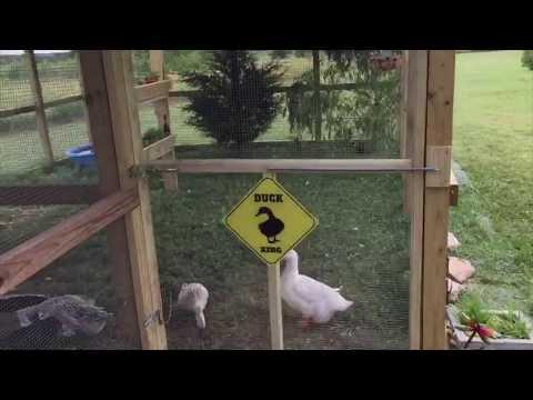 The Ducks Got A New House!