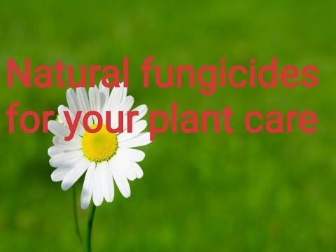 Natural fungicides for plant care