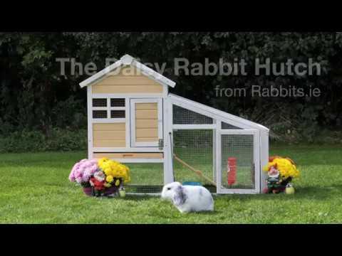 The Daisy Rabbit Hutch