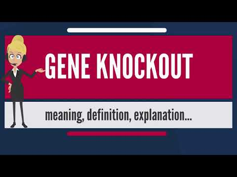 What is GENE KNOCKOUT? What does GENE KNOCKOUT mean? GENE KNOCKOUT meaning & explanation