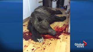 Man shoots grizzly bear that broke into his home [Canada]
