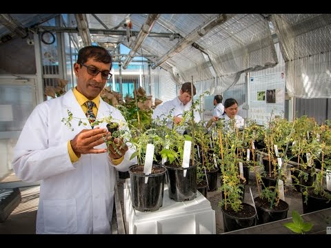 Why Science and Engineering at QUT?