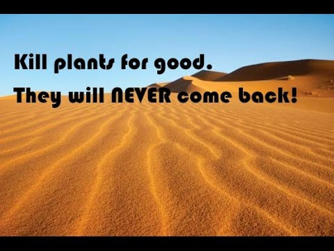 Kill trees, plants, poison oak, and more for good! Never comes back. LINK TO FIND BELOW
