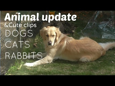 Animal update