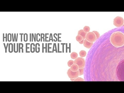 How to Increase Your Egg Health