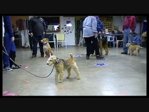 Sharpening up Your Dog while having Fun