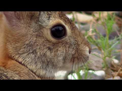 Rabbit & Tick