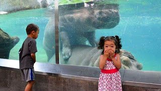 TRY NOT TO LAUGH - Funny Babies At The Zoo - Funny Animals Reaction - Baby Sharks 2021