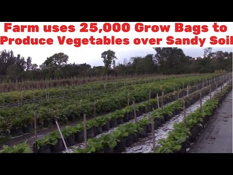 Farm uses 25,000 Grow Bags to Produce Vegetables over Sandy Florida Soil