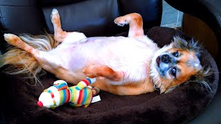 Lazy Pets! Cute and Funny Animal Videos