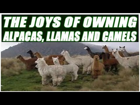The Joys Of Owning Alpacas, Llamas, and Camels