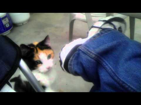 Callie wants her Black Forest Ham