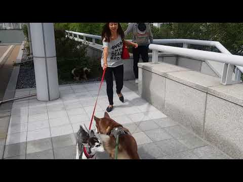 Flying a dog out of Korea as checked baggage from Incheon Airport