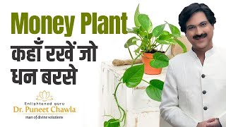 Money Plant : How to Plant and Grow Money Plant? Vastu Tips for Money Plant to Earn More Money