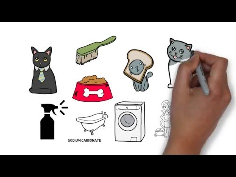 HOW TO - Get Rid of Cat Urine Smell Anywhere - Removing Cat Pee Tips
