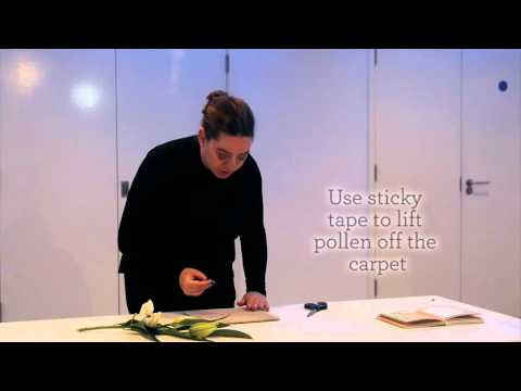 How to remove pollen from carpet