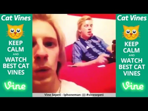 Ultimate Cat Vines Compilation #1 - March 2016