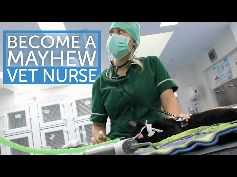 Become a Mayhew Vet Nurse! | The Mayhew