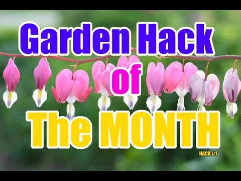EASY Way Garden Labels Under 5 Dollars in Less than 1 Minute | Gardening Hack of Month