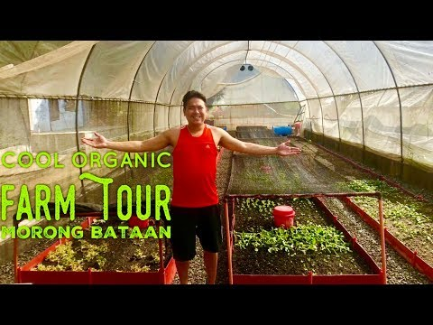 Cool Farm Tour Organic Vegetables Arugula Baby Red Romaine Microgreens Morong Bataan