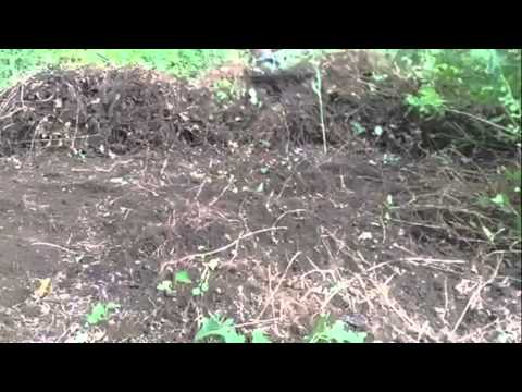 How to remove vines from hill or yard