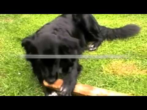 My Dog Is Chewing Everything - How To Redirect A Chewing Dog