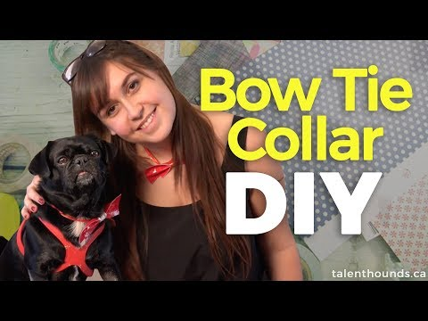 DIY: How to Make a Bow Tie Collar for Your Dog