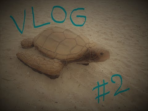 Florida Road Trip ♥ Vlog #2 ♥  Fort Myers ~ Venice ~ Sarasota